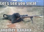 Let's See You Steal Another Banana