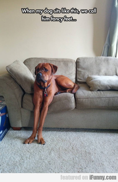 When my dog sits like this we call him fancy..