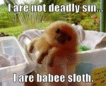 I Are Not Deadly Sin... I Are Babee Sloth