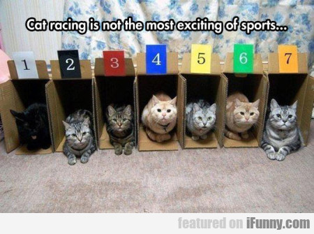 Cat racing is not the most exciting of sports...