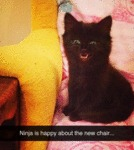 Ninja Is Happy About The New Chair...