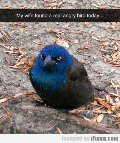My Wife Found A Real Angry Bird Today...