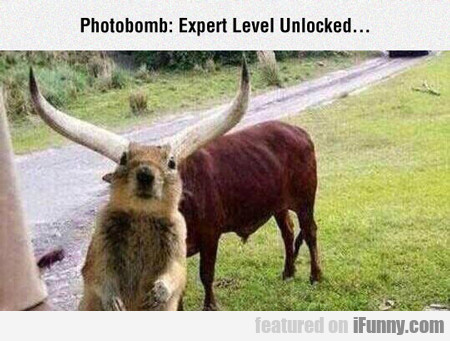 Photobomb: Expert Level Unlocked...