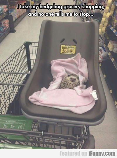 I Take My Hedgehog Grocery Shopping...