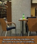 Somebody Left Their Dog In The Library...