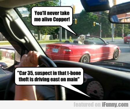 You'll Never Take Me Alive Copper! Car 35...