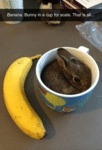 Banana. Bunny In A Cup For Scale. That Is All