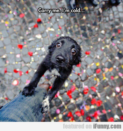 Carry Me. I'm Cold...