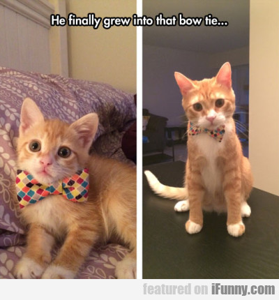 He Finally Grew Into That Bow Tie...