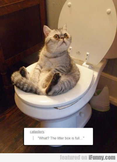 What The Litter Box Is Full...