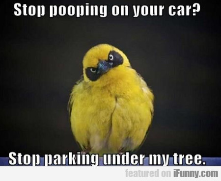 Stop Pooping On Your Car? Stop Parking...