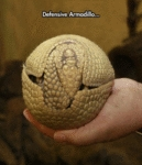 Defensive Armadillo...