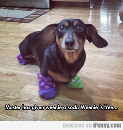 Master Has Given Weenie A Sock. Weenie Is...