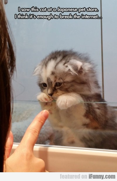 I saw this cat at a Japanese pet store. I think...