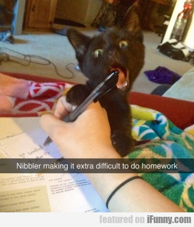 Nibbler Making It Extra Difficult To Do Homework