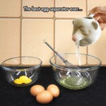 The Best Egg Separator Ever...