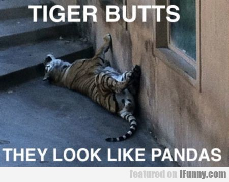 Tiger Butts. They Look Like Pandas