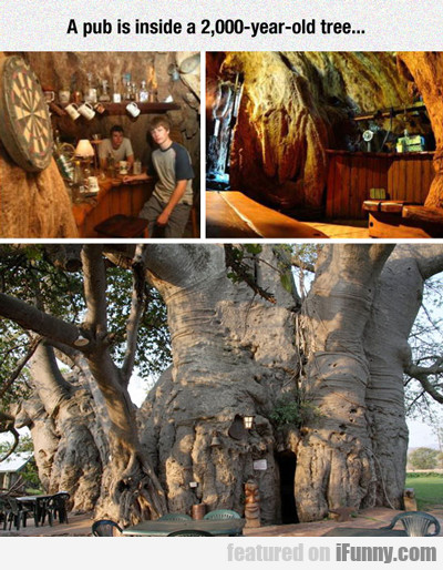 A Pub Is Inside A 2,000 Year Old Tree...