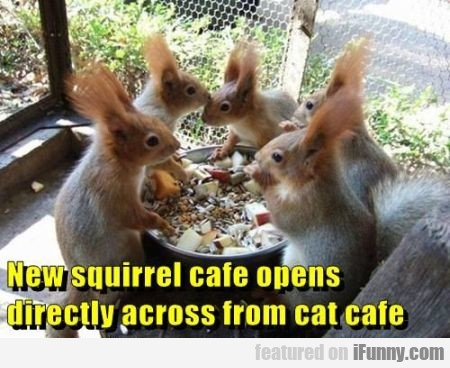 New Squirrel Cafe Opens