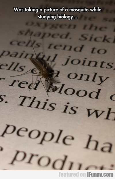 Was Taking A Picture Of A Mosquito While...