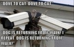 Dove To Cat Dove To Cat