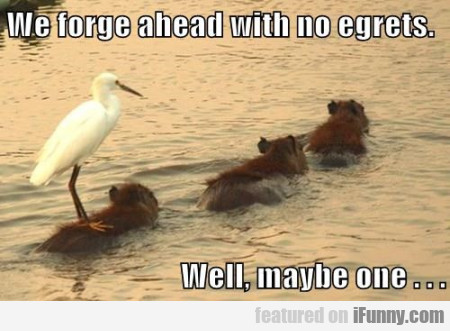 We Forge Ahead With No Egrets
