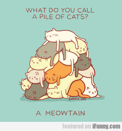 What Do You Call A Pile Of Cats
