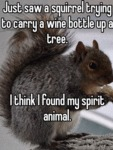 Just Saw A Squirrel Trying To Carry A Wine...