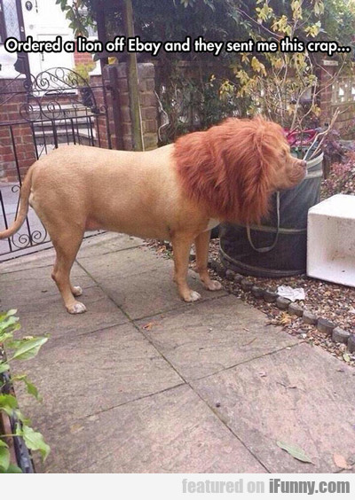 Ordered A Lion Off Ebay...