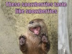 These Snozzberries