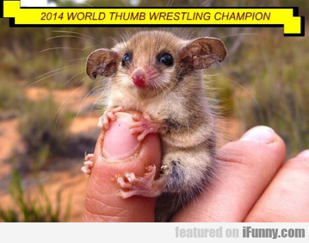 2014 World Thumb