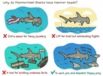 Why Do Hammerhead
