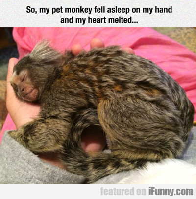 So, My Pet Monkey Fell Asleep...