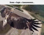 Drone Plus Eagle Equals Awesomeness...