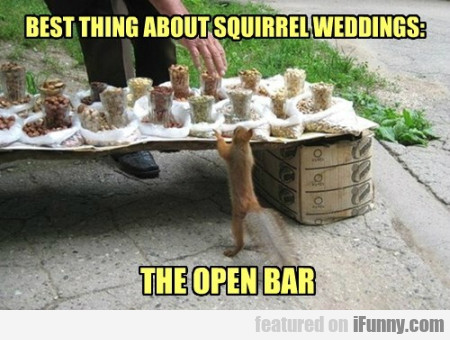 Best Thing About Squirrel