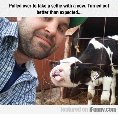 Pulled Over To Take A Selfie With A Cow...