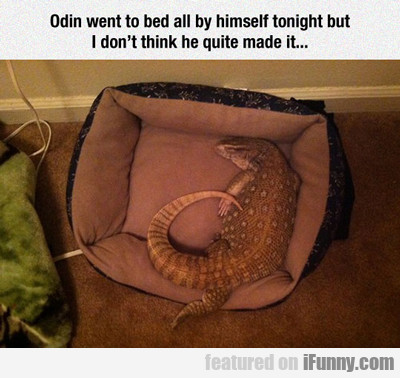 Odin Went To Bed...