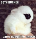 Goth Bunneh Cares Bought For Awwws