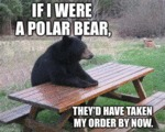 If I Were A Polar Bear...