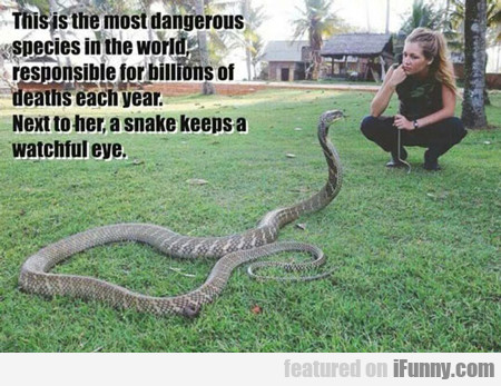 This Is The Most Dangerous Species In The World...