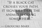 If A Black Cat Crosses Your Path...