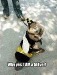 Why Yes, I Am A Beever