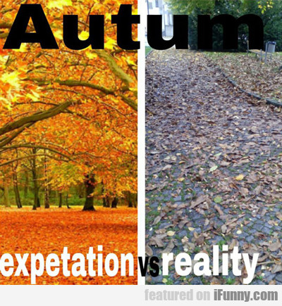 Autumn: Expectation Versus Reality