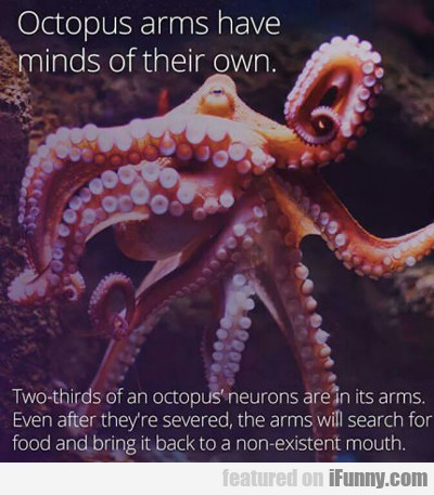 Octopus Arms Have Minds Of Their Own...