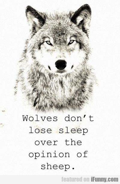 Wolves Don't Lose Sleep Over Te Opinion