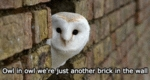 Owl In Owl We're Just Another Brick