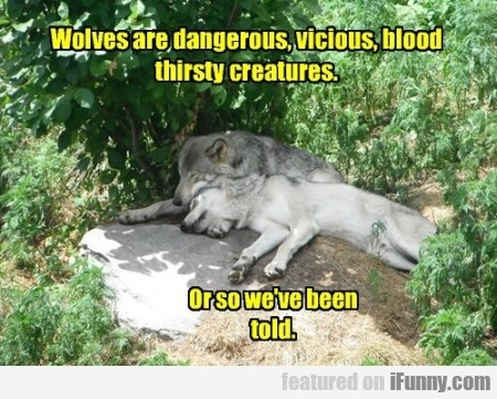Wolves Are Dangerous
