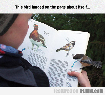This Bird Landed On The Page About Itself...