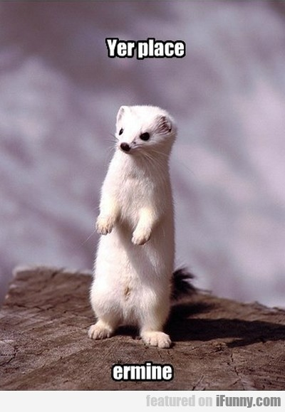 Yer Place Ermine
