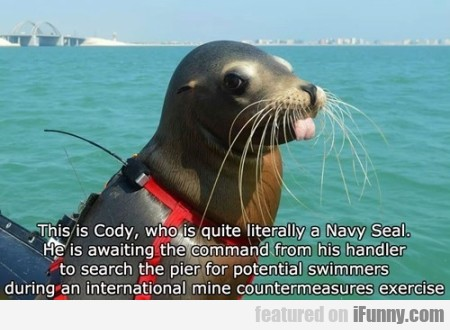 this is cody who is quite